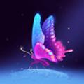 新花蝴蝶平台